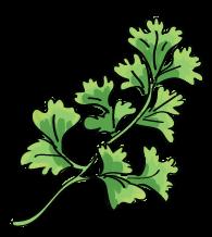 Herb Garden, Cilantro
