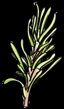Herb Garden, rosemary